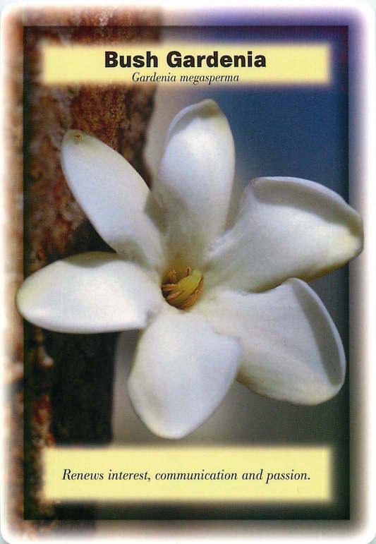 Irama Bush Gardenia